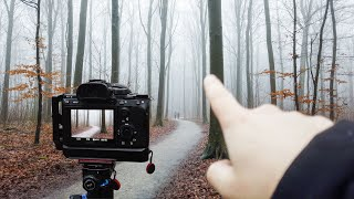 The Golden Rule of Forest Photography (Not Fog ;))