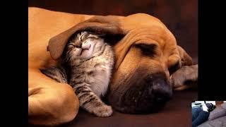 Ченнелинг Кошки и собаки Роль в жизни человека