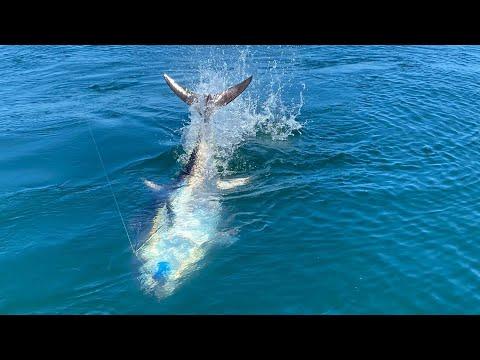 GIANT Bluefin Tuna In SHALLOW Water Off Long Island, New York