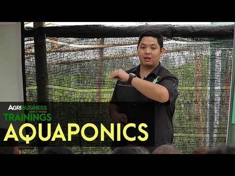 Aquaponics System | Agribusiness How It Works Trainings