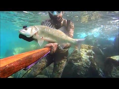 1st ΛΑΒΡΑΚΙ 2020 Spearfishing By Leon