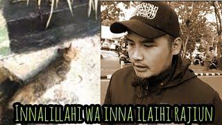 Gambar cover Semua Mahluk Ciptaan Allah Azza Wa Jalla | Termasuk Kucing