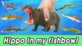 [EN] #61 hippopotamus in my fishbowl! kids education, Dinosaurs animationㅣCoCosToy