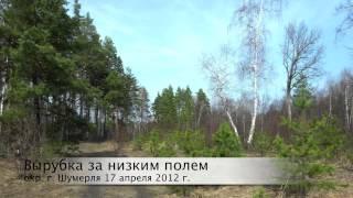 Голоса птиц Певчий дрозд, зарянка, пухляк 17 апреля 2012 г.