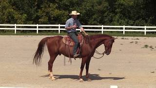 How to Soften and Supple Your Horse with a Slower Request