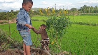 Baby Monkey | Afternoon Of Monkey Doo With His Brother