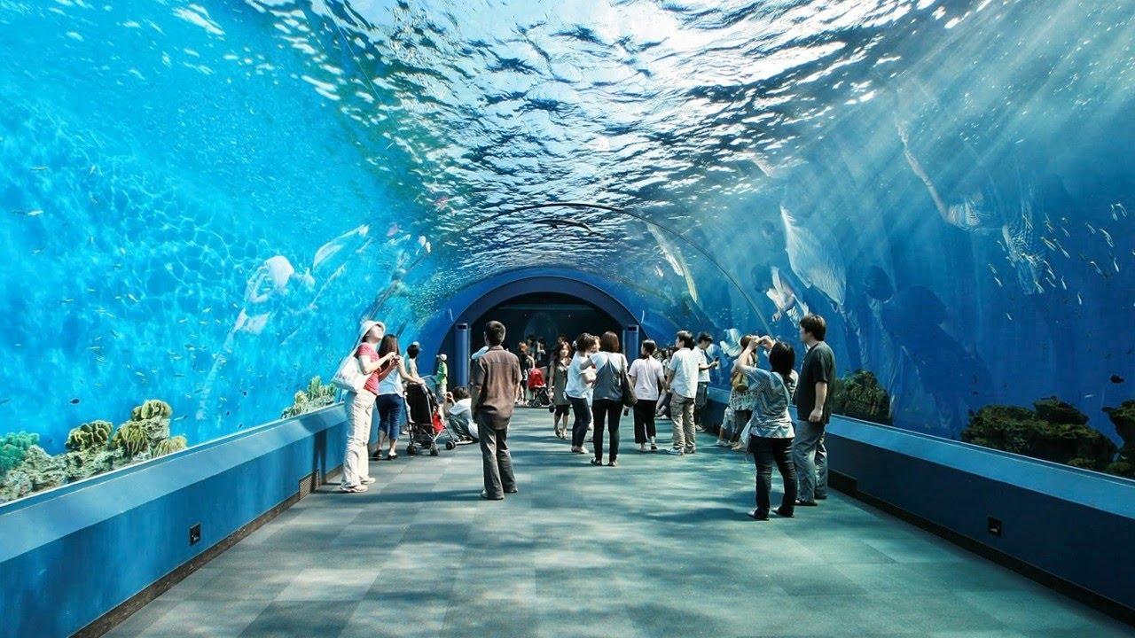 underwater water park. Underwater Water Park