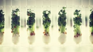 Sustainable Living: Innovative Ways To Grow Your Own Food!