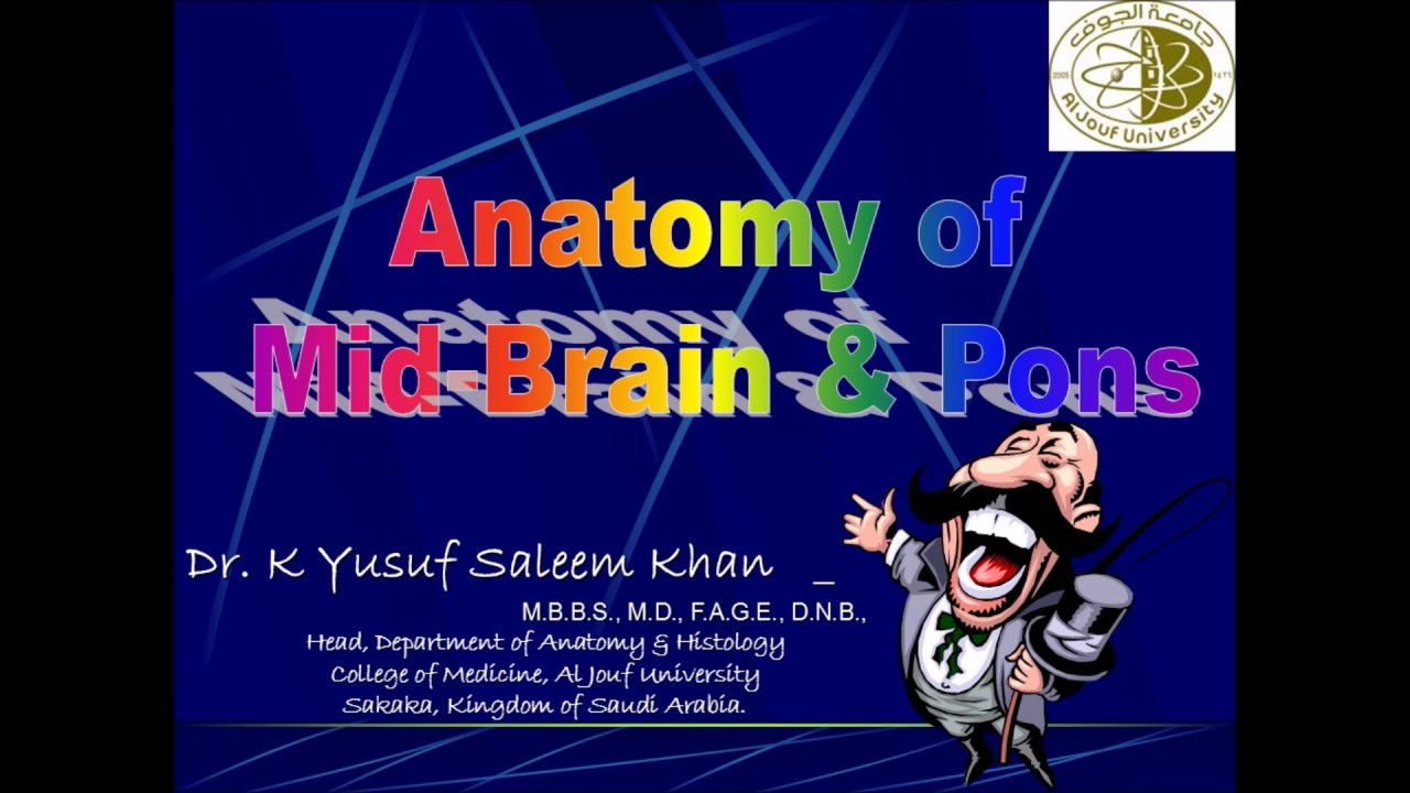 Anatomy Lecture On Brain Stem 1 Mid Brain Pons Youtube