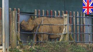 Nosorożec staranował opiekuna w zoo
