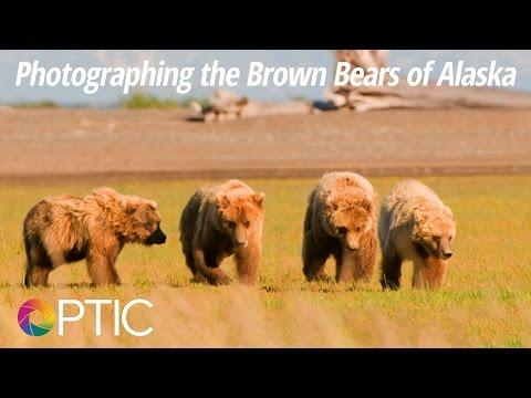 Optic 2016: Photographing the Brown Bears of Alaska with David Cardinal