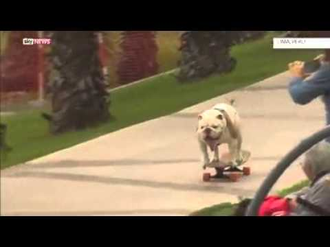 Anjing pintar thumbnail