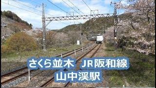 【JR西日本】春の桜と山中渓駅 Yamanakadani Station