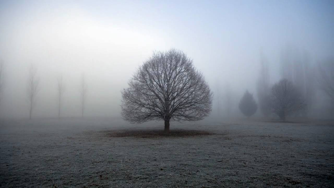 Image result for foggy tree