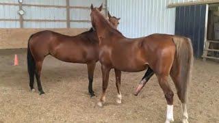 Big Horse Mating Compilation Mix Series |Horse Mating // Horse Crossing //donkey Mating And Crossing