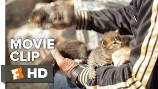 Kedi Movie CLIP - Abandoned Kittens (2017) - Documentary