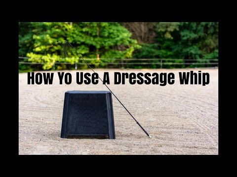 Using Your Dressage Whip // How to Change Your Whip Hand Correctly