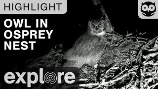 Owl Invades the Osprey Nest at Night - Live Cam Highlight thumbnail