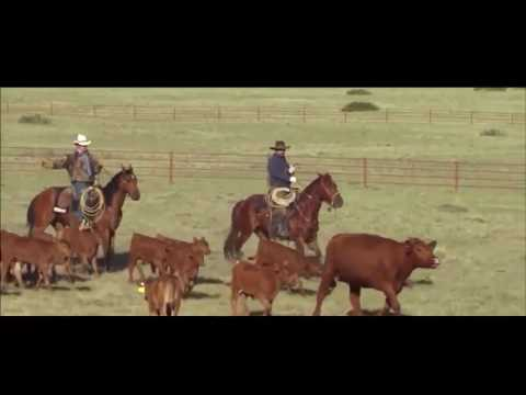Horse Veterinary Science Documentary