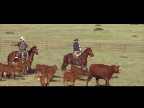 Horse Veterinary Science Documentary