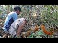 Pikat burung Puyuh hutan menggunakan suara bikin GERGET