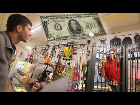 we-found-a-$500-bill,-a-parrot,-and-battle-axes!-quakertown-qmart!