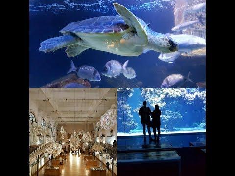 Musée Océanographique de Monaco VLOG