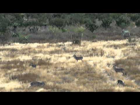 30-06 Whitetail Deer