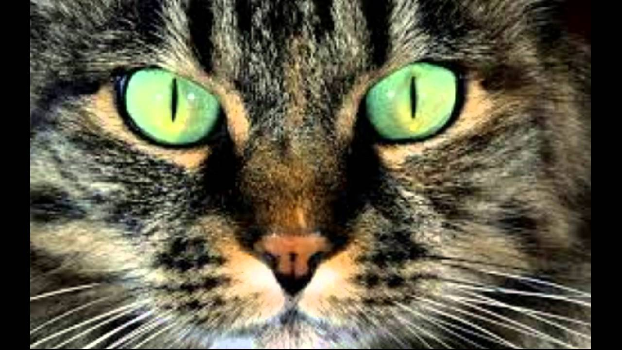 Sound Effect   Gatto Che Miagola   The Cat   Effetti Sonori   YouTube
