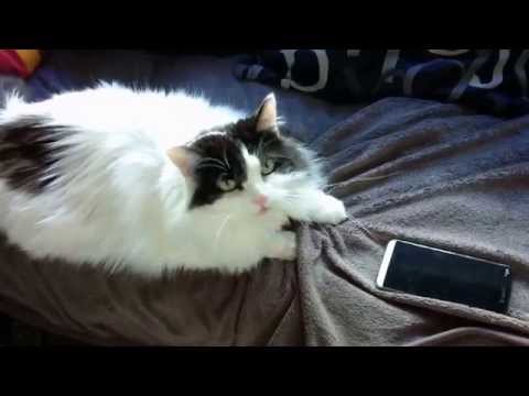 Y'en A MARRE ! Chat VS. Smartphone