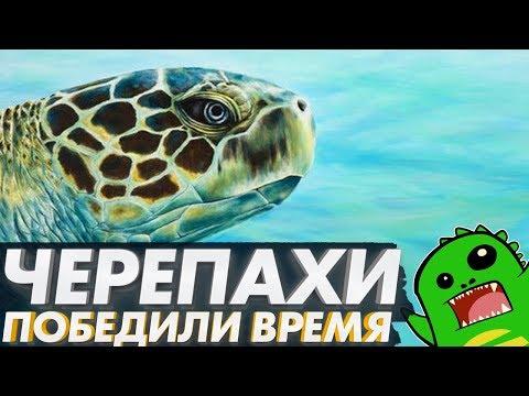 ПЕРЕЖИВШИЕ ДИНОЗАВРОВ: как черепахи обманули эволюцию