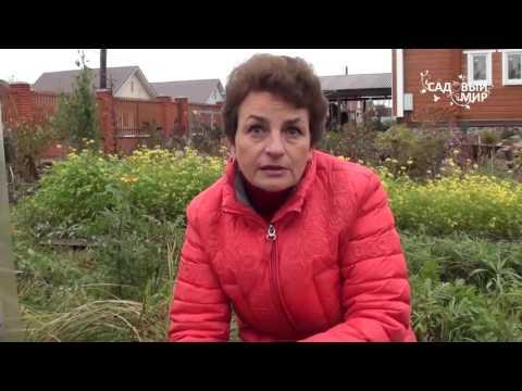 видео: Как выращивать ремонтантную землянику  Октябрьское чудо