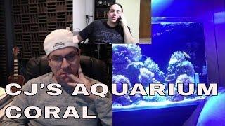 cj s aquarium coral in jbj 45