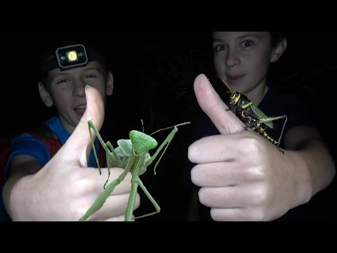 4K Insects All Over: Grasshopper Punches & Ninja Mantis Moves. Fun Travel Nature Herping Fishing.