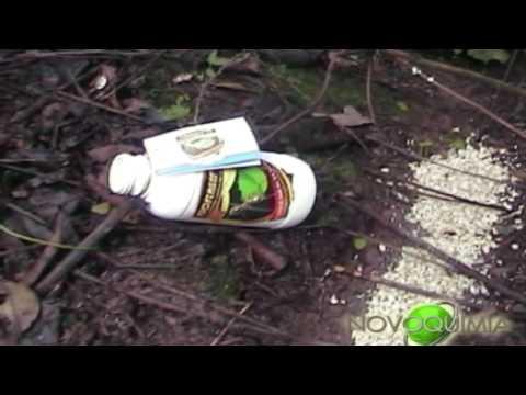 Como evitar que las hormigas suban a los arboles doovi for Como acabar con las hormigas del jardin