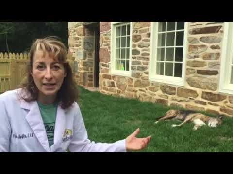 Job interview at a veterinary hospital tips