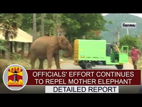 Detailed Report : Officials' Effort Continues to Repel Mother Elephant | Thanthi TV