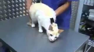 Видео приколы: гипноз для кота - смотрите бесплатно