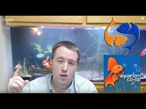 Quarantining Fish With Aquarium Co Op Tank Talk Live Pres