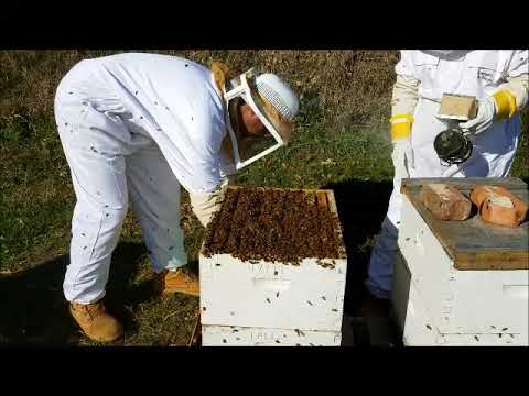 How to get your honey bee hives ready for winter 2017 - 2018