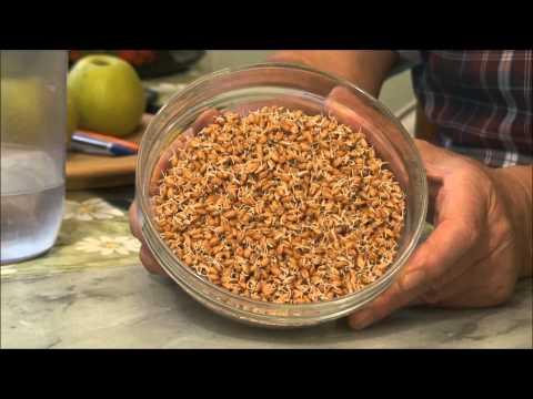 Как правильно прорастить пшеницу для еды?