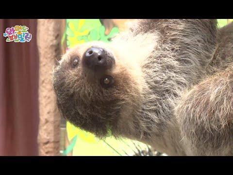 Wild Family, Two-toed Sloth #03, 두 발가락 나무늘보 20140725