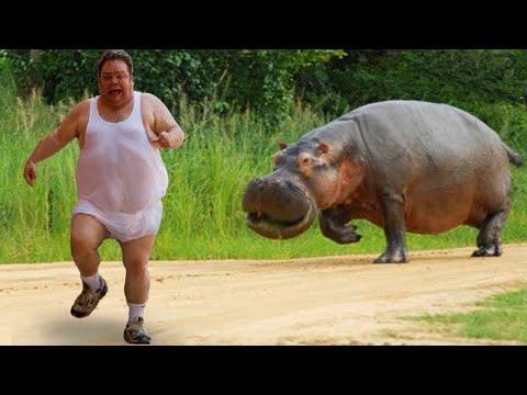 동물을 무서워하는 재미있는 사람들   재미있는 비디오 2020