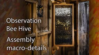 Honey Bee Observation Hive 8-Frame Setup How to Start Keeping Bees with a split!