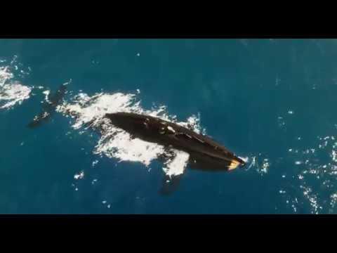 Crest Ocean Submarine Scene 1