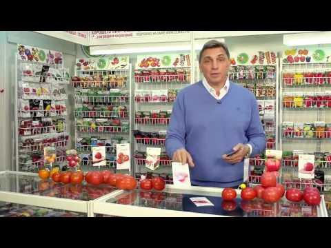 Детерминантные томаты для открытого грунта