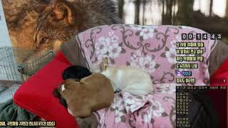멍삼촌의 동물농장TV