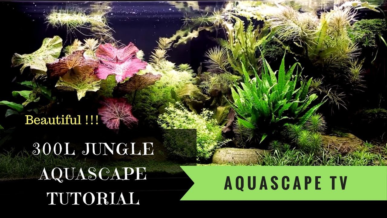 Watch Now! 300L Jungle Style Aquascape Tutorial with ...