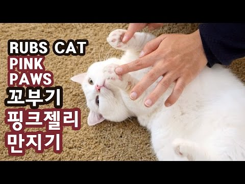 고양이 꼬부기의 핑크 젤리 만지기 RUBS CAT'S PINK PAWS