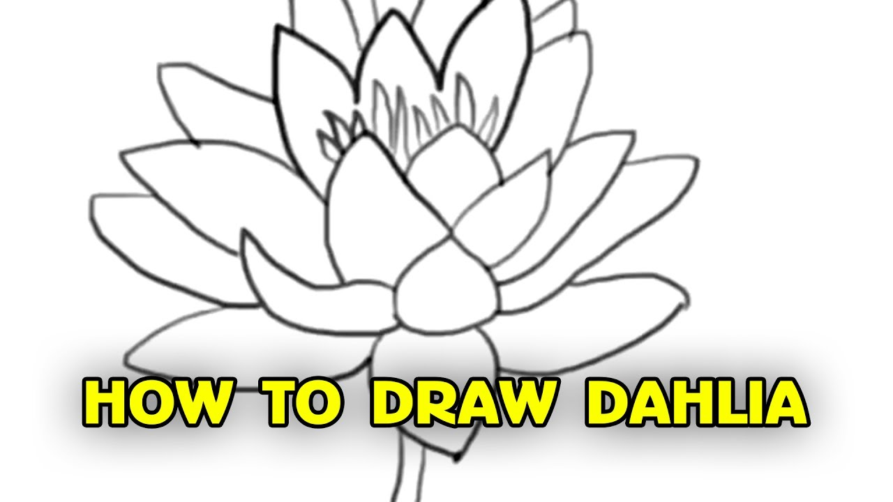 Free Tutorial How To Draw Dahlia Step By Step By Silly
